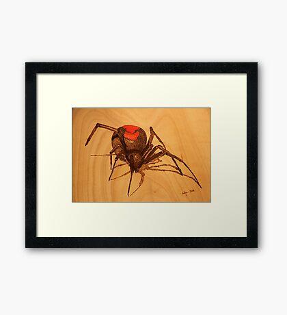 Pyrography: Australian Redback Spider Framed Print