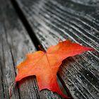 October Fallen by Richard Ahne