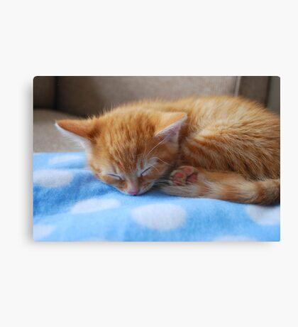 Kitten at 8 weeks Canvas Print