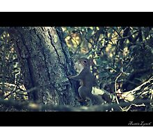 Squirrel Photographic Print