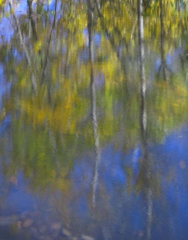 Seasonal Reflection's by Bill Coughlin