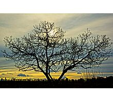 Loney tree at sunset Photographic Print