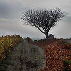Tree Top by Paul Pasco