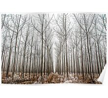 Frosted Tree Farm Poster