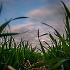 Young Wheat by mrmattb