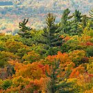 Gatineau Park Lookout by Daniel  Parent