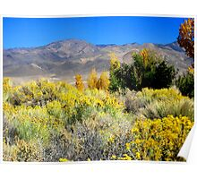 Beautiful White Mountains In Fall Poster