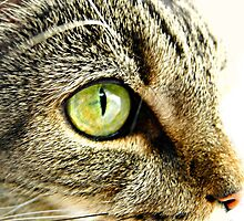 Emerald cat eyes by Sarah St. Pierre