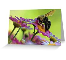 Bumble Bee and Beautiful Marguerite Daisies Greeting Card