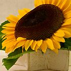 Short Petalled Sunflower In Star Box by Sandra Foster