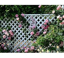 Rosalee Cottage Garden Photographic Print