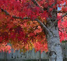 Tree of flames by Jean Poulton