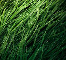 Grass Texture by Imre Krénn