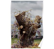 flowering wisteria on trunk Poster