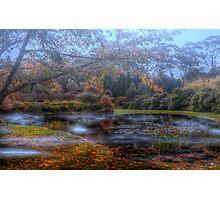 Bisley Gardens - Mt Wilson NSW Australia Photographic Print