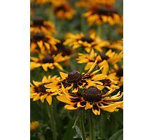 Sunshine Flowers Photographic Print