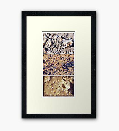 Shells by Three Framed Print