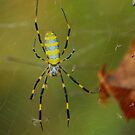 Autumn spider by davvi