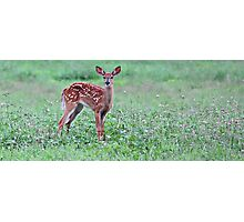 'The Yearling' Photographic Print