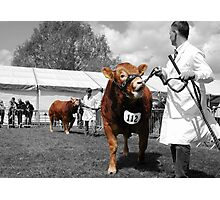 Northumberland Show 2012 Photographic Print