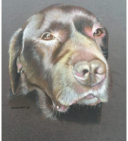Chester the wise super shiny brown labrador Sticker