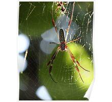 Spider In The Morning Sun - Araña En La Luz Del Sol De La Mañana Poster