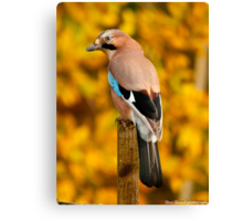 autumn jay Canvas Print
