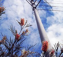 Wires Over Wattle by Robert Phillips