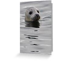 Seal head Greeting Card