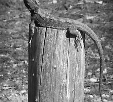 Dragon on a Post by Peter Gray
