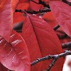 Red Leaves by Karen Jayne Yousse