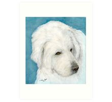 Great White Pyrenees Dog Pet Animal Cathy Peek Art Print