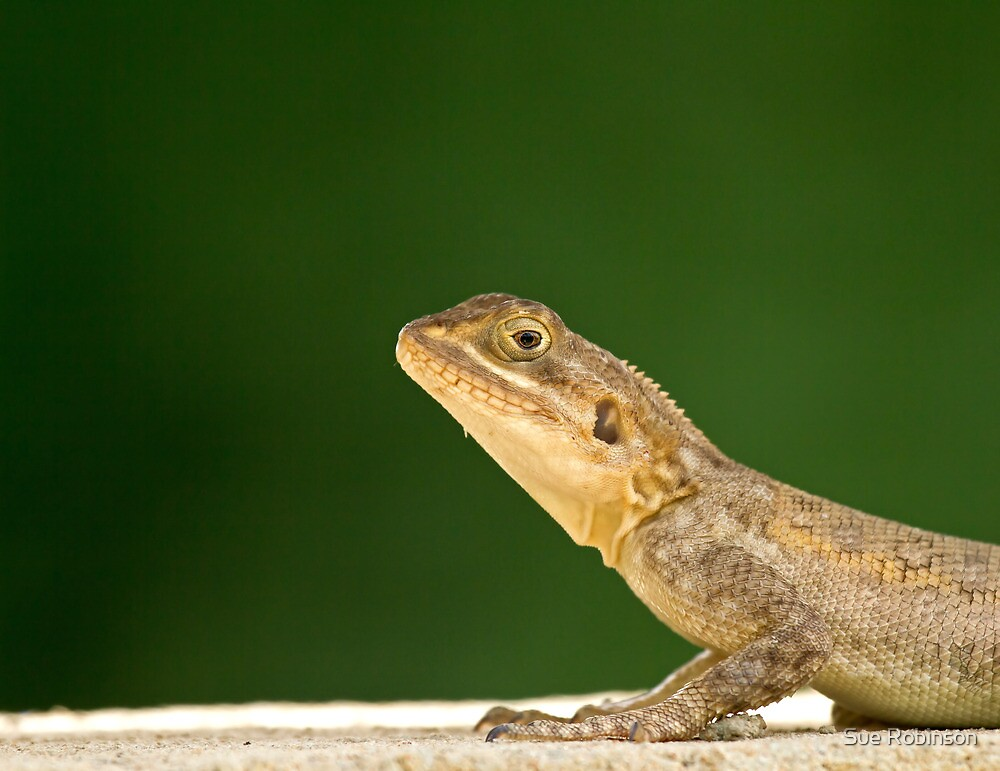 Lizard head and front legs by Sue Robinson