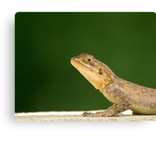 Lizard head and front legs Canvas Print