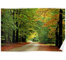 Riding through the autumnal forest Poster