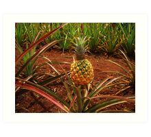 Pineapple Plantation Art Print