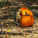 What? I like Pumpkins Too!! by Cynthia Broomfield