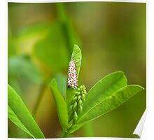Crimson-speckled Footman Moth Poster
