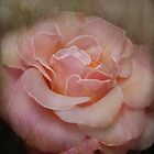 Textured rose by Nicole W.
