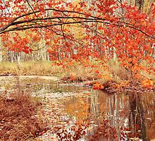 Oak Branch over Autumn Stream  by Roupen  Baker