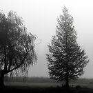 Trees in Morning Fog by katpix