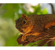 Curious Squirrel Photographic Print