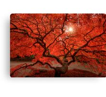 Red Lace Canvas Print