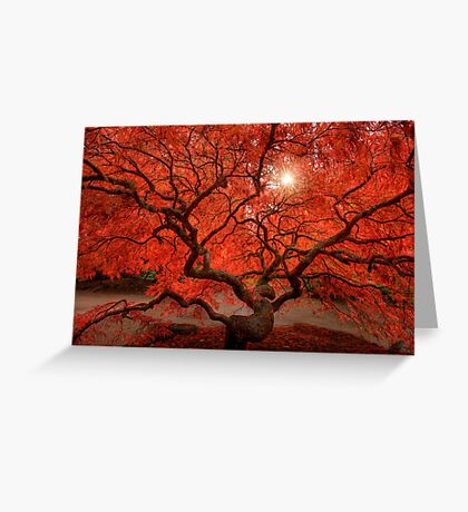 Red Lace Greeting Card