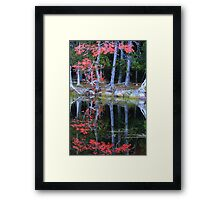 Red Oak on a Forest Pond Framed Print