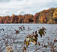 Lake Newport in Autumn by Monnie Ryan