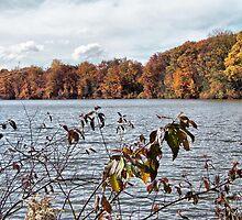 Lake Newport in Autumn by Monnie Ryan