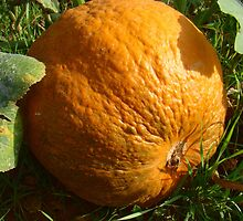 Pumpkin or Orange by Kidono-chan