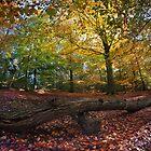 kingmoor woods by paul mcgreevy