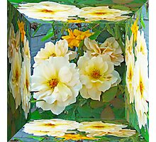 Old Fashioned Yellow Rose - Mirror Box Photographic Print